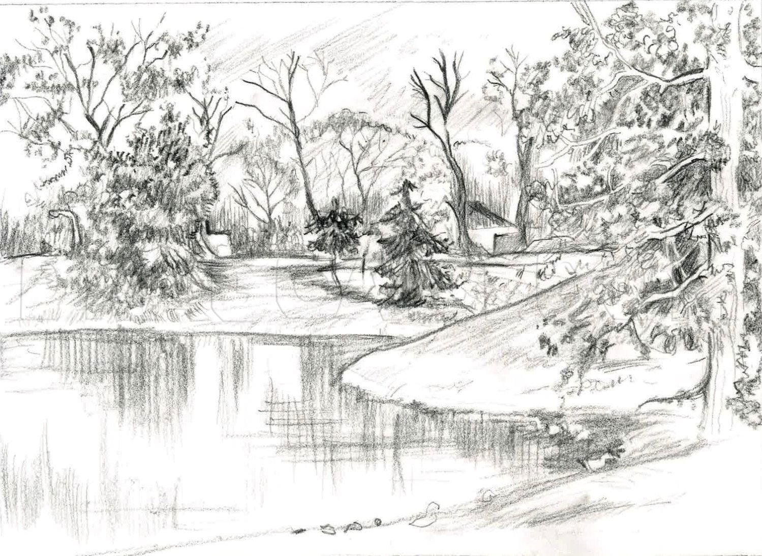How To Sketch Trees